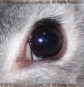 vab-chin-eye-2014-03-08_15-33-51_wm